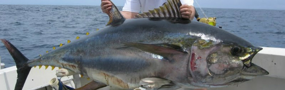 1122 lb. Bluefin Tuna!! Watch The Hook Up!!!!!!